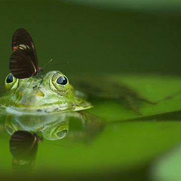 בקשה: אל תהיי צפרדע בסיר.